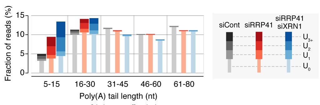mRNA-urid-fig6-original